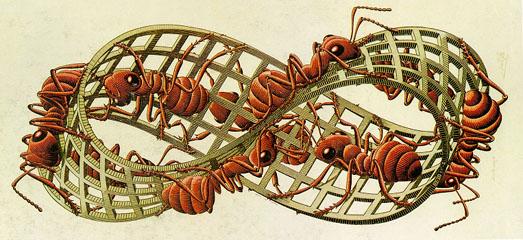 Storia di un formicaio